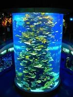 亚克力鱼缸-鱼缸定做-上海大型亚克力鱼缸制作厂家