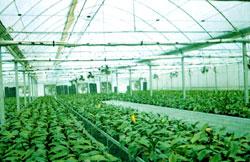 上海智域温室工程有限公司—上海温室大棚_上海温室工程