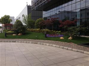 上海别墅景观-上海别墅绿化-松江别墅景观绿化工程公司