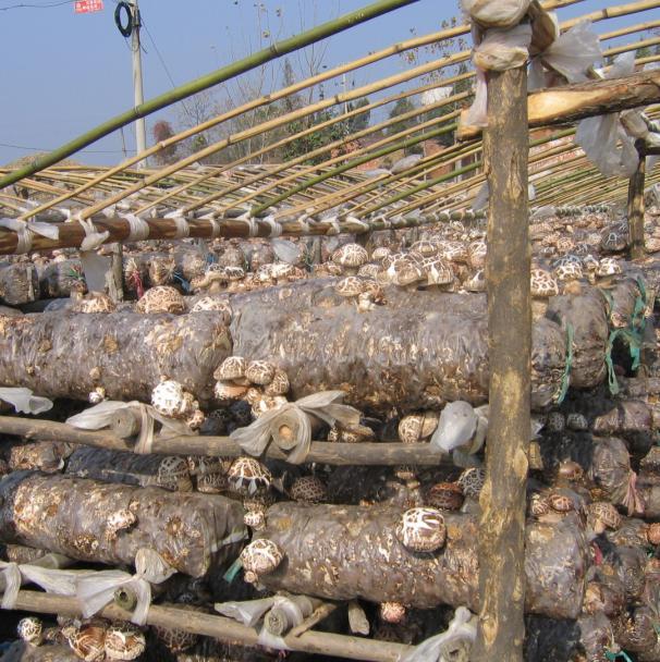 华中香菇木耳种植基地