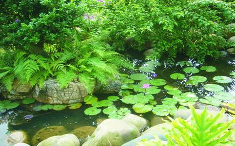 古典园林中水面常用来衬托水景的植物不外乎荷花,睡莲,萍蓬,菖蒲