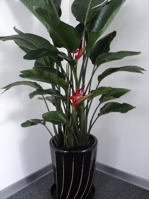 红鹤当头植物电脑壁纸