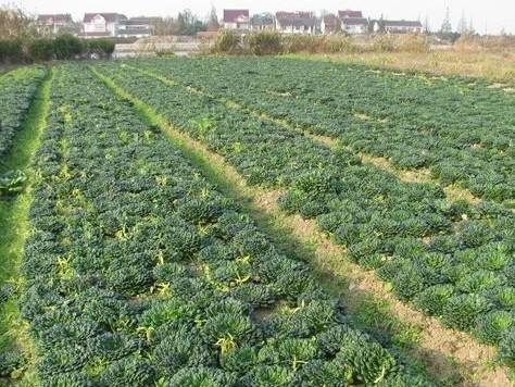 有机蔬菜与有机农业的关系