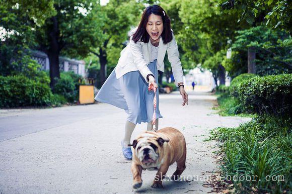 上海宠物家教-上海宠物家教公司电话