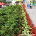 上海道路绿化设计-上海道路绿化设计公司