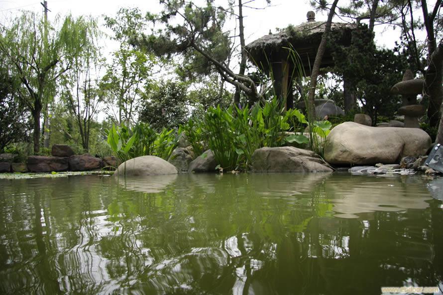 上海庭院绿化_景观设计_上海别墅绿化_上海苗木批发