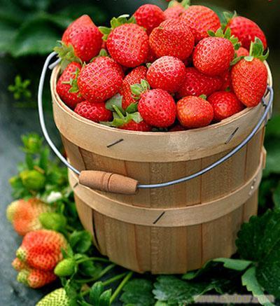 上海青浦白鹤采草莓吃农家乐