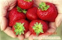 赵屯采摘草莓季节