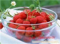 赵屯优质草莓