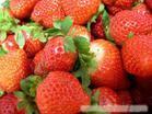 青浦采摘草莓农家乐