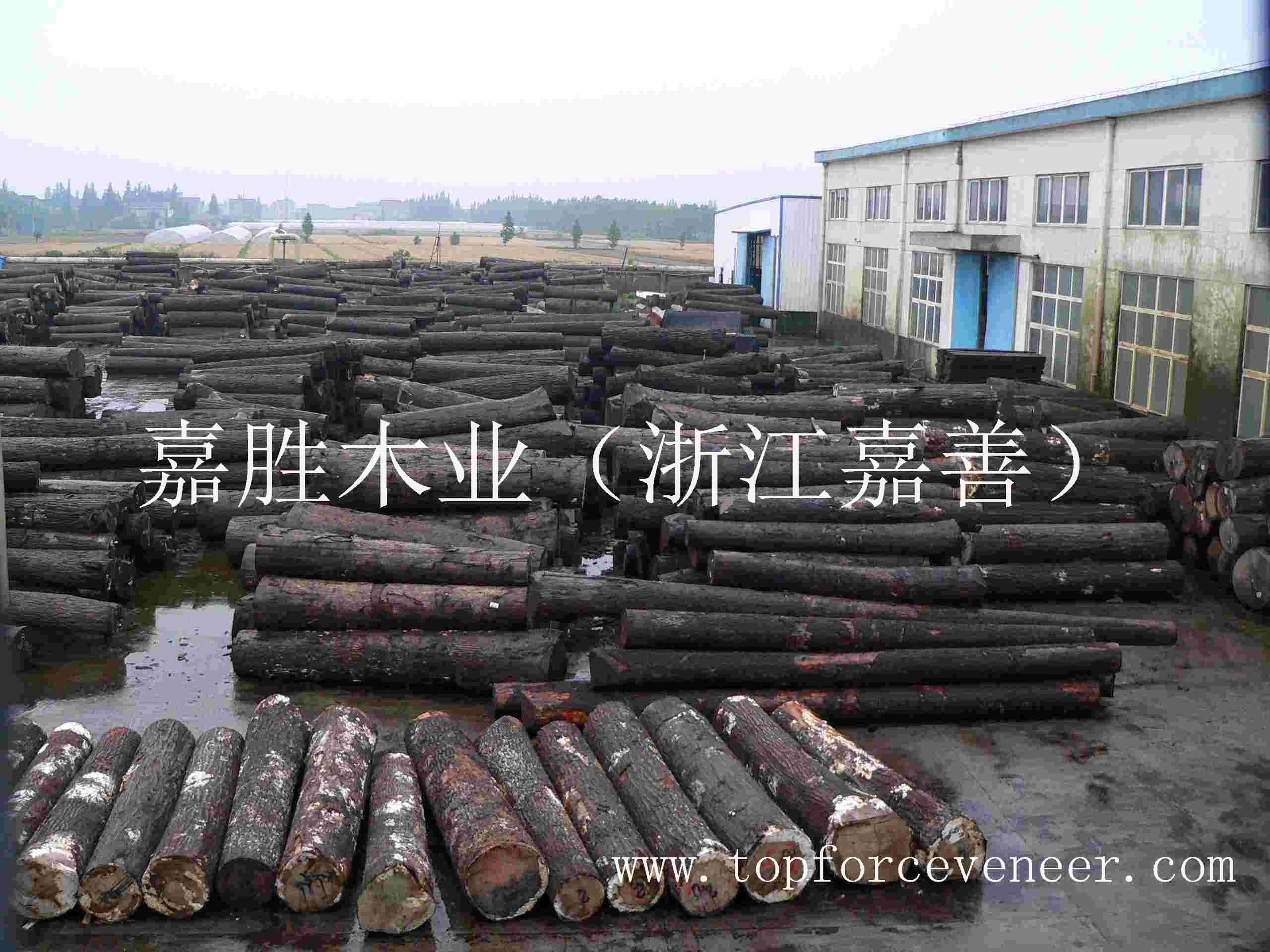 浙江木皮生产商 ZheJiang JiaShan Veneer Slicing Cutting Rift Cutting Factory or Agent
