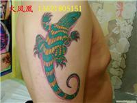 壁虎纹身-上海动物纹身图片