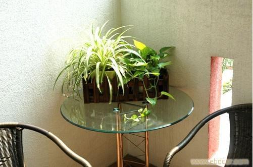 小型绿植租摆,我公司提供专业的绿植租摆,不论规模大小,我们的服务