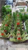 上海浦东园林绿化,上海浦东租花卉租赁,,上海绿化养护