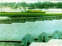联合六型单体塑料温室大棚-连栋温室大棚厂