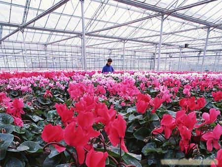 上海塑料薄膜温室大棚_上海温室大棚_薄膜温室大棚搭建