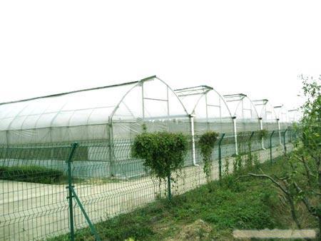 GSW-7430型连栋薄膜温室_上海连栋温室搭建_连栋温室价格_上海温室设备