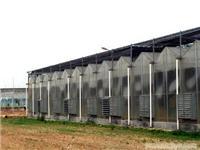 文洛式PC板温室-上海PC板温室-PC板温室搭建-上海温室工程