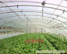 温室大棚/上海温室大棚/上海温室大棚公司