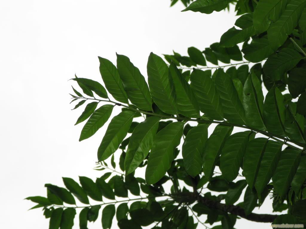 背景 壁纸 绿色 绿叶 树叶 植物 桌面 蕨类 1024_768