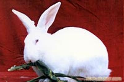 壁纸 动物 兔子 400_264