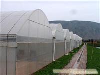 上海温室大棚搭建/温室大棚搭建