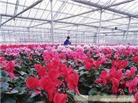 上海温室大棚价格/温室大棚价格