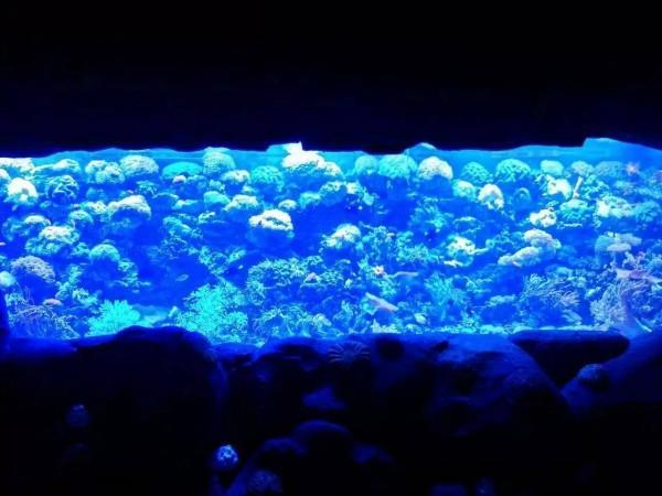 大型亚克力鱼缸制作-亚克力鱼缸定做-鱼缸定做价格