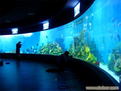 定做亚克力鱼缸-鱼缸定做价格-大型亚克力水族工程厂家