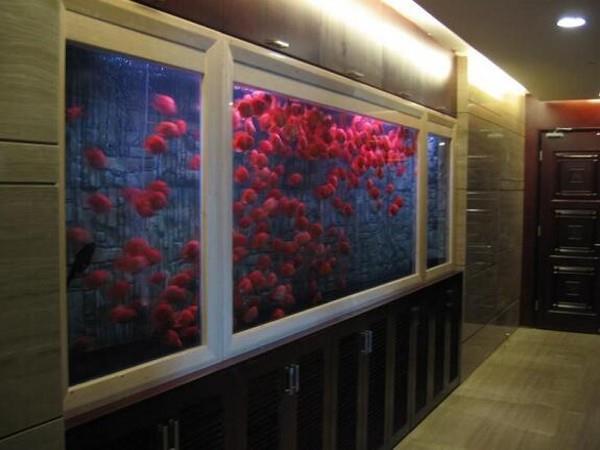 大型观赏鱼缸-观赏鱼缸定做-亚克力水族工程-上海鱼缸厂家