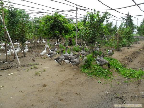 生态特色养殖观赏休闲区-上海西沙一号生态园