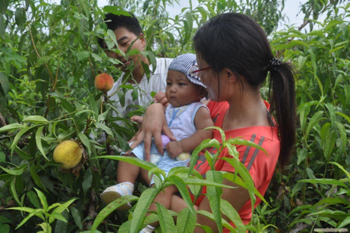 崇明水果采摘-上海摘水果
