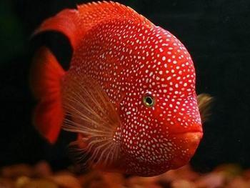 嘉定区热带鱼养殖场_北方大棚热带鱼养殖场建设图片