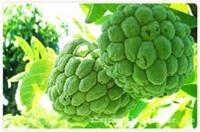 生态特色养殖观赏休闲区/有机水果种植采摘公司