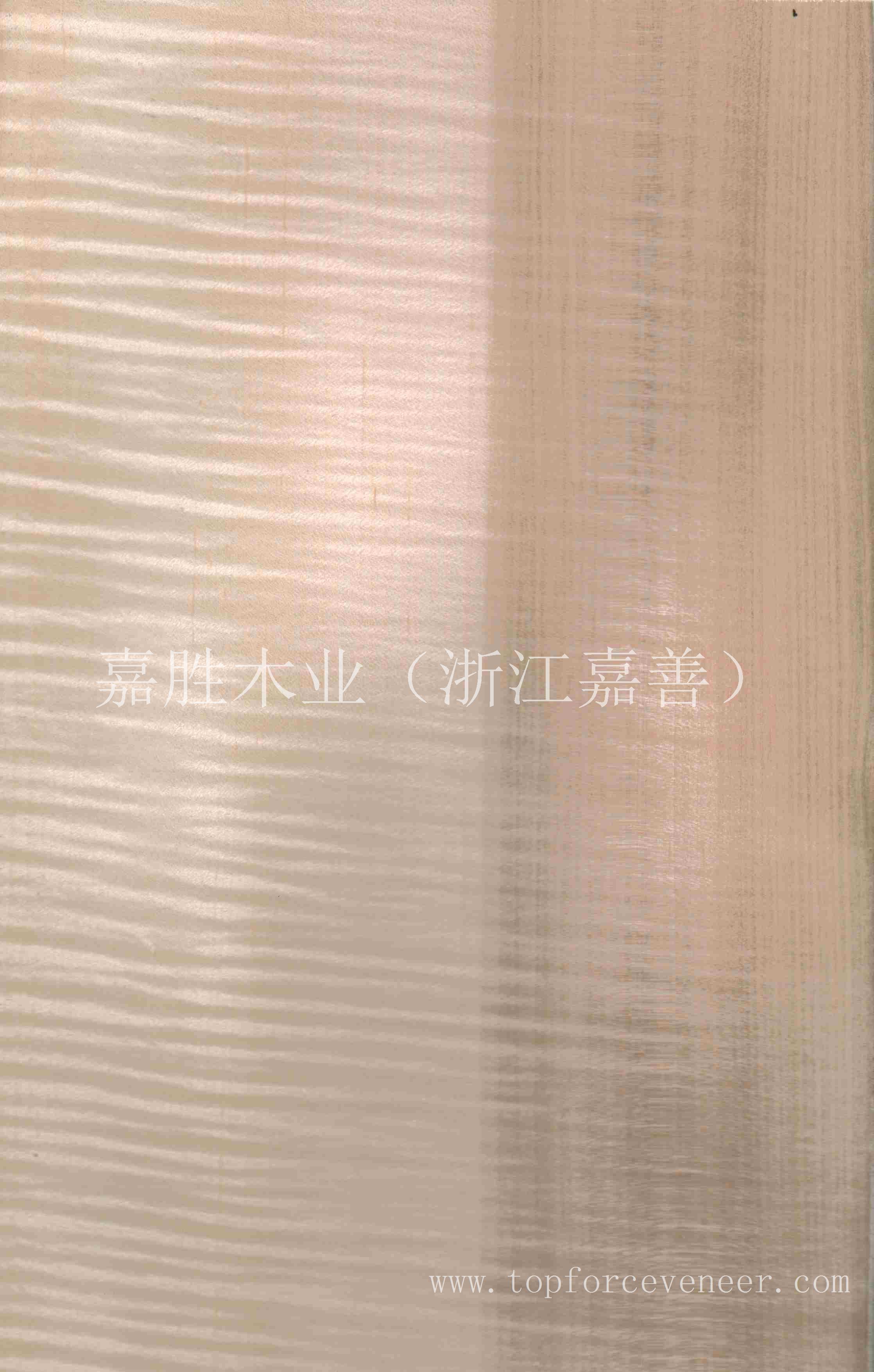枫木直纹影双色(Figure Maple QC)