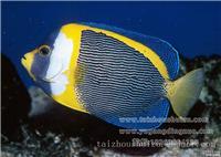 澳洲神仙,泰州鱼缸定做