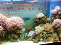 珊瑚鱼虾1