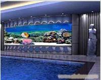 游泳池鱼缸