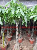 上海张江植物租赁
