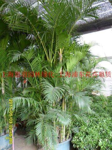 上海办公室绿化租赁|上海张江办公室绿化租赁