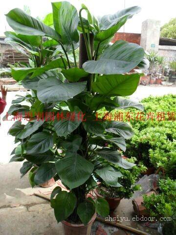 上海张江办公室植物租赁公司