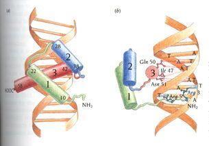 酵母单杂交技术检测