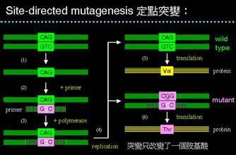 酵母单杂交检测实验|上海龙旸