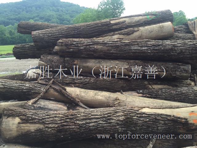 浙江嘉善干窑美国黑胡桃原木 ZheJiang Jiashan GanYao American Walnut Veneer Log / Saw Log