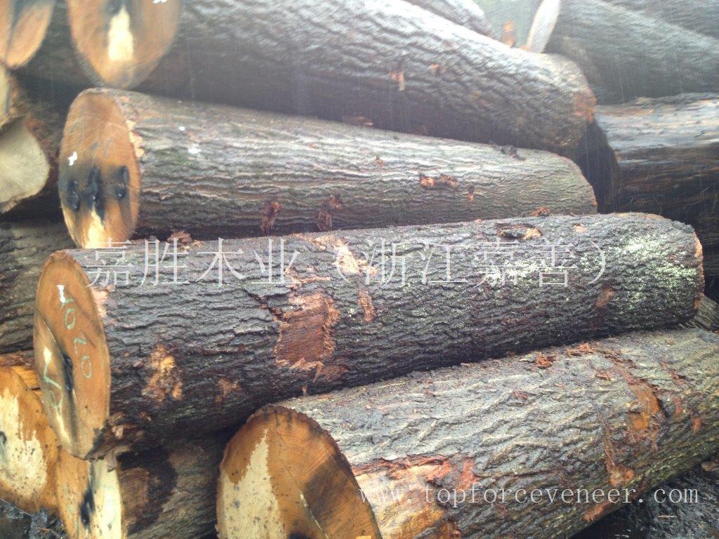 北美美国佛蒙特或缅因州红橡刨切级4SC 3SC原木 Vermont & New Hampshire Red Oak Veneer Logs