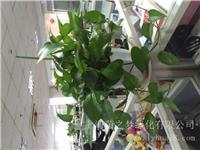 上海办公室绿化_上海办公室绿化租赁_上海办公室植物养护