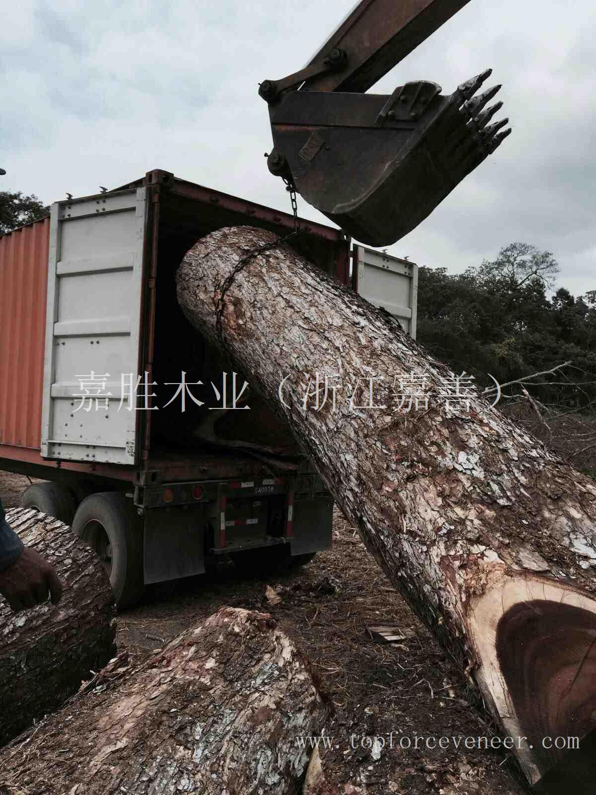 南美胡桃 (南美琥珀木) South American Walnut