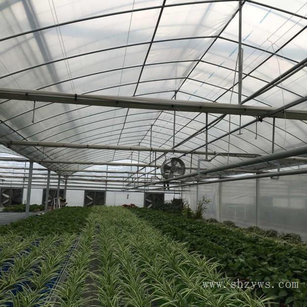 上海蔬菜大棚 上海温室大棚