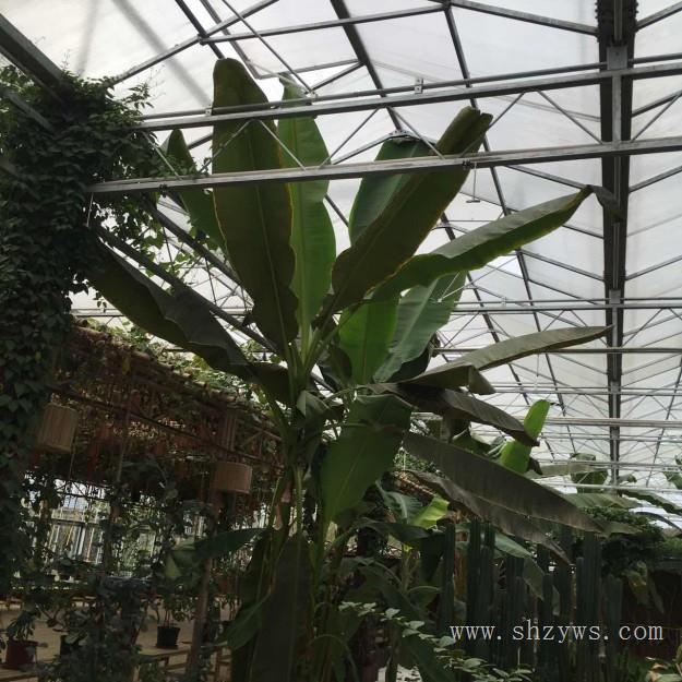 上海温室大棚安装 上海温室大棚施工