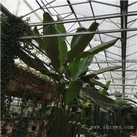 上海温室大棚安装|上海温室大棚施工